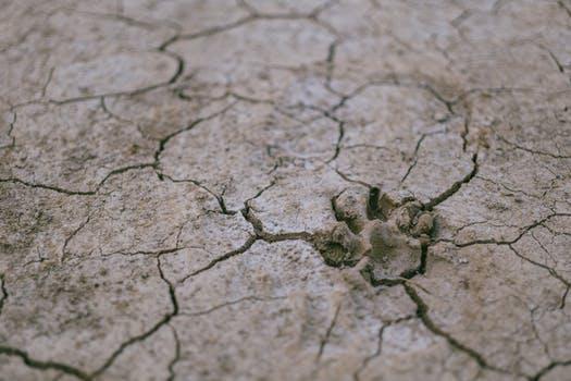 de aarde kreunt © Pexels