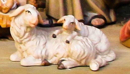 kerststal schaapjes