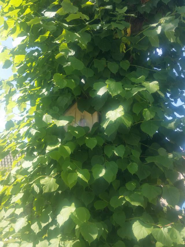In de zomer zit het kapelletje verstopt achter de bladeren © Francine Maelfeyt