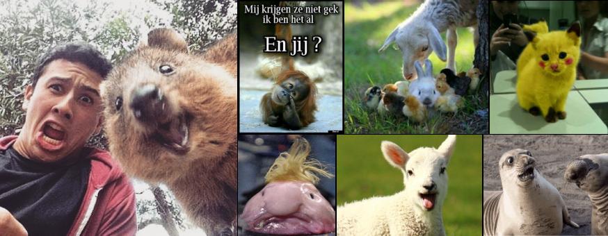 Tijdens één van onze activiteiten probeerden we de tofste dierenfoto's op het internet te vinden!