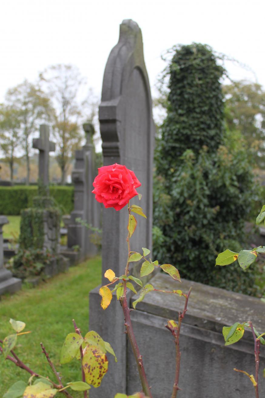 Begraafplaats © foto rAm