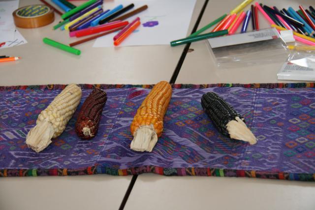 De symboliek van (de kleuren) maïs © Federatie Krekedal Kortemark